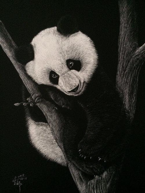 Portrait illustration of pandas