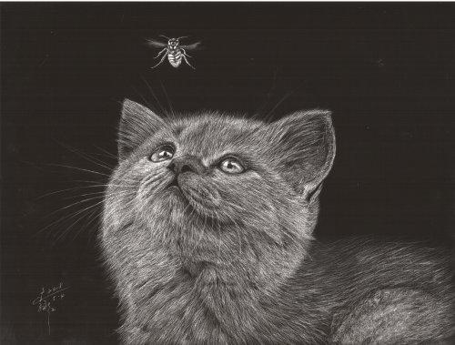 Illustration animale britannique à poil court