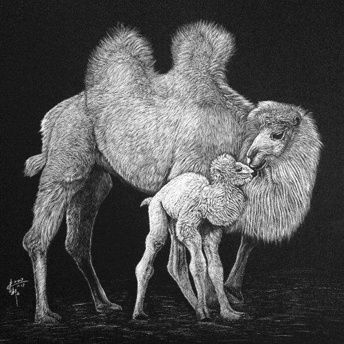 Animal illustration of camel
