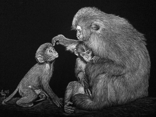 New World monkeys black and white drawing