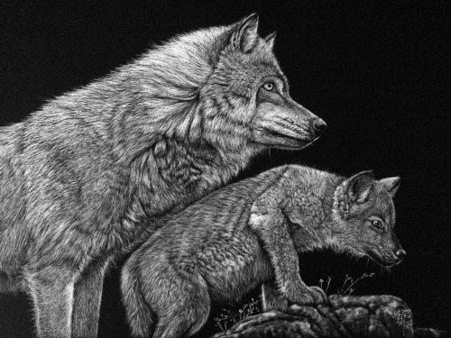Black and white illustration of wolf love