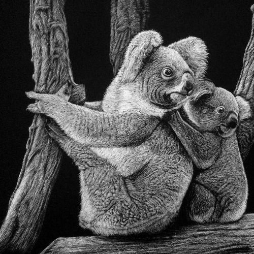 Koala Animal illustration