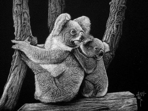 Illustration animale Koala