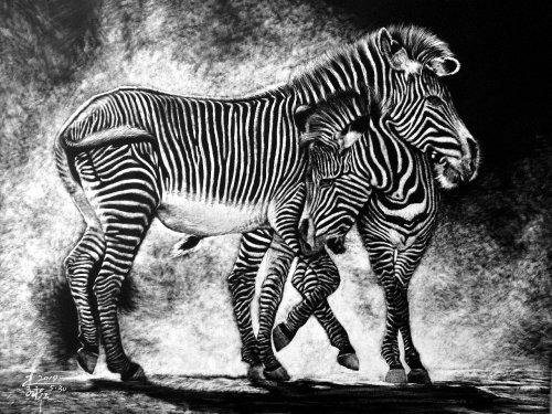 Illustration animale de zèbre
