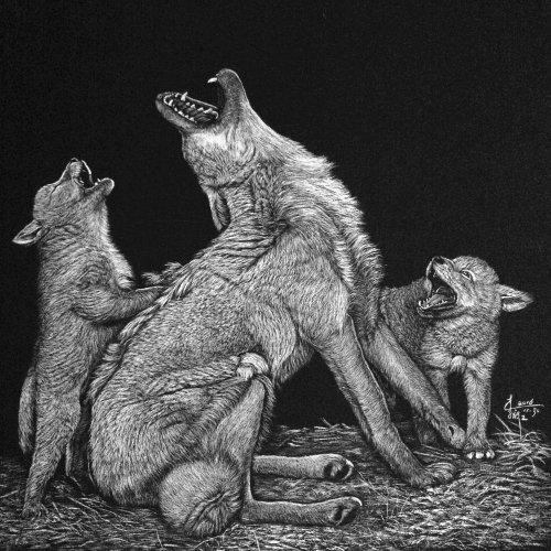 Illustration animale Panthera