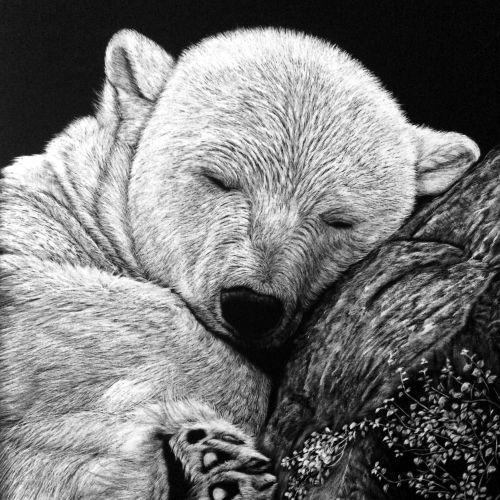 Grizzly bear animal illustration