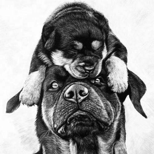 Animal Illustration of ancient dog breeds
