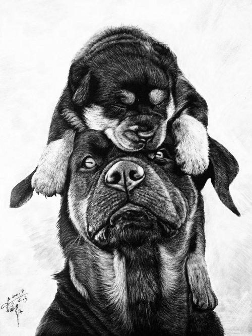 Illustration animale d'anciennes races de chiens