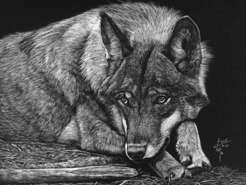 Illustration animale du loup