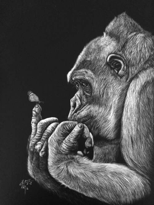 Illustration animale de gorille