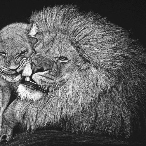 Lion Love with child nature illustration