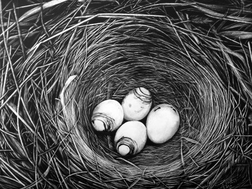 Nature illustration of Birds Nest with eggs