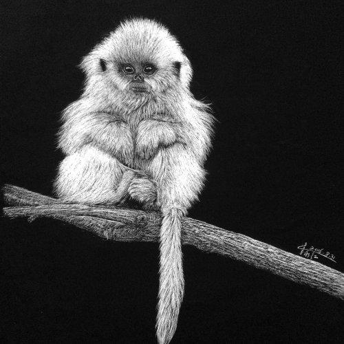 Animal Illustration of Marmoset monkey