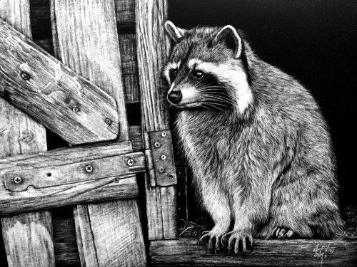 Illustration animale de ratons laveurs