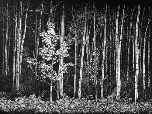 Spruce-fir forests animal illustration