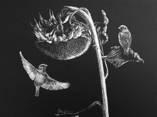 Illustration animale de Hawk Bird