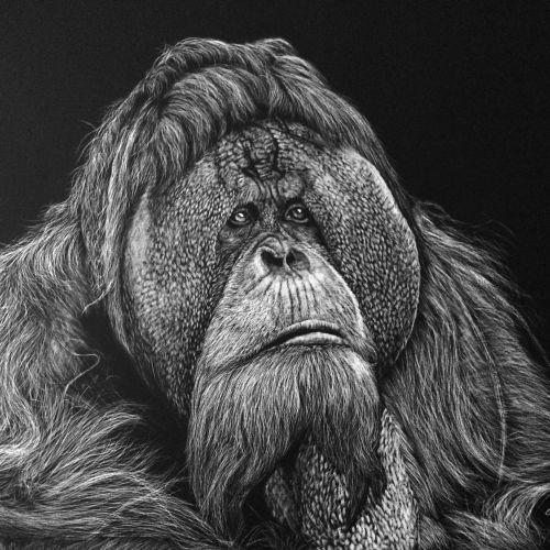 Li Yong Hong Animals