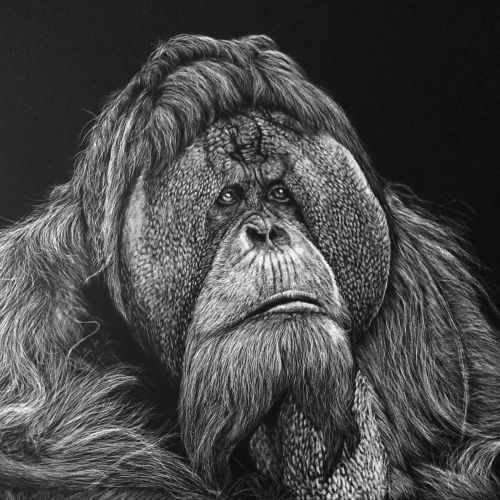 Black and white illustration of King Kong