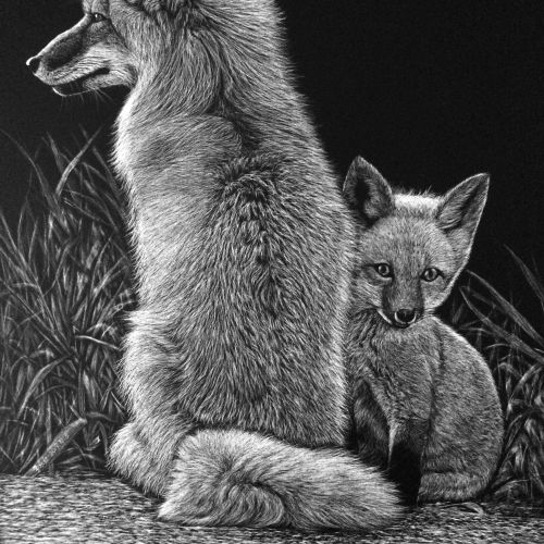 Alaskan tundra wolf animal illustration
