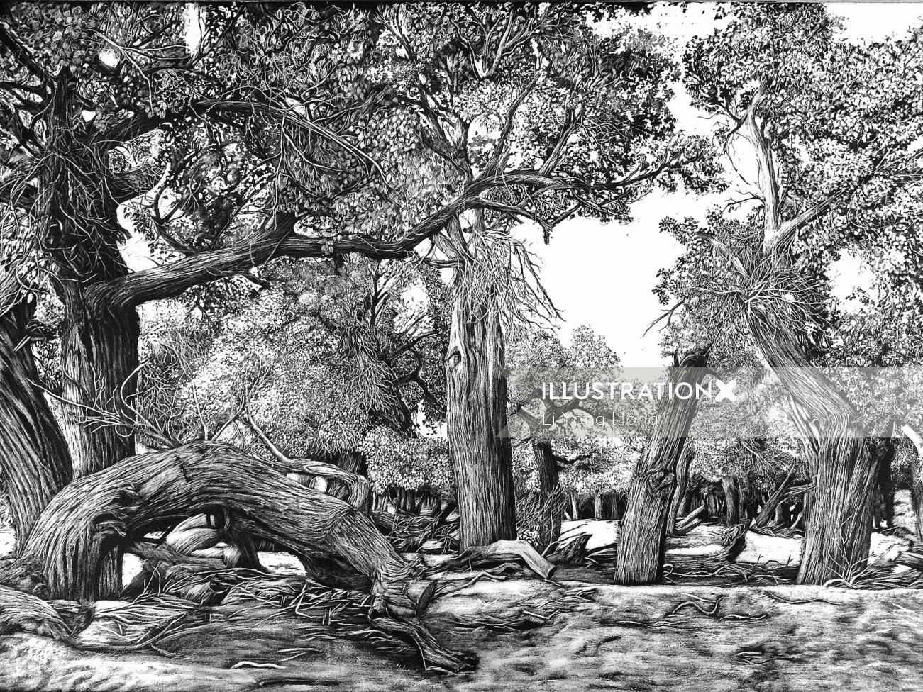 Nature illustration of forest
