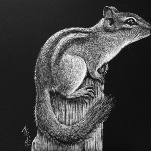 Animal illustration of Rock squirrel