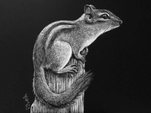 Illustration animale de l'écureuil de roche