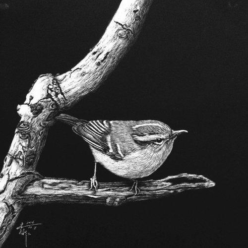 Illustration d'oiseau troglodyte de Caroline