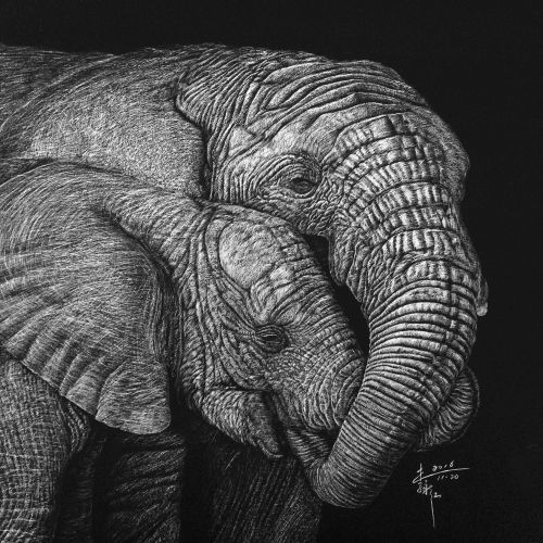 Indian elephant animal illustration