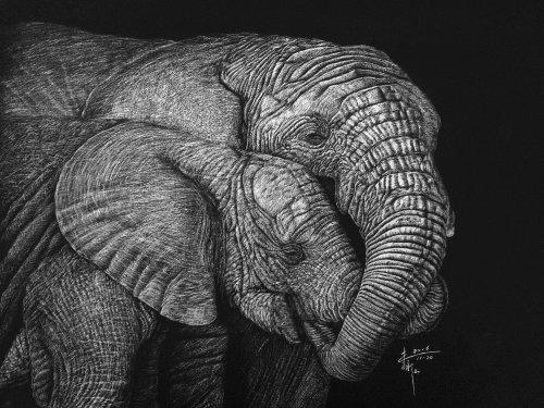 Illustration animale éléphant indien