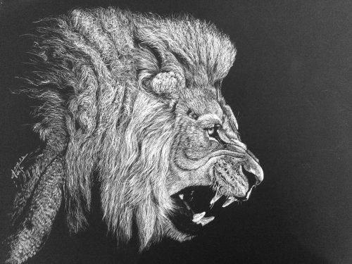 Illustration animale du lion rugissant