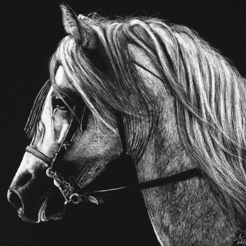 Horse portrait illustration
