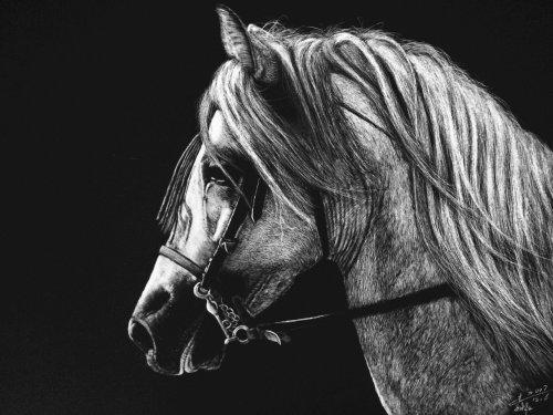 Illustration de portrait de cheval