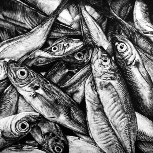 Anchovy Fish animal illustration