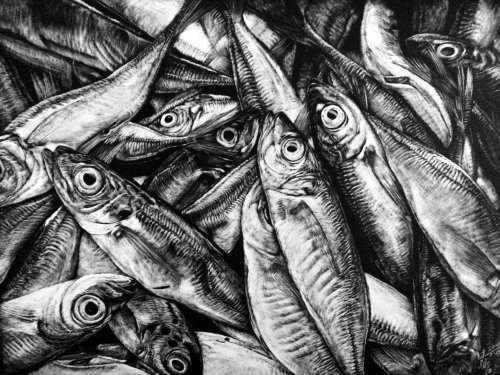 Illustration animale poisson anchois