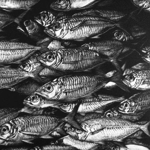 Animal illustration of Pacific saury fish