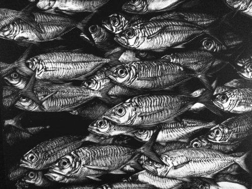 Illustration animale de poisson balaou du Pacifique