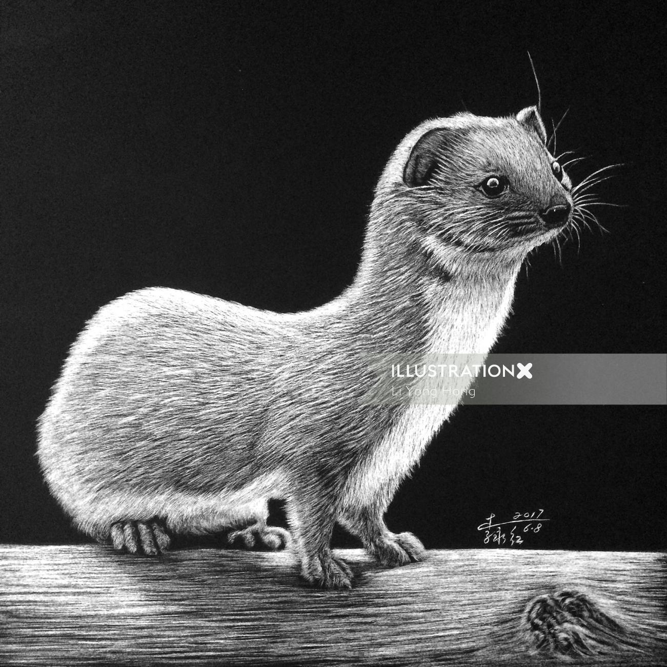 Least weasel Animal Illustration