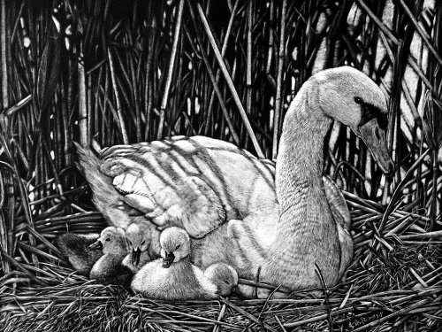 Animal illustration of Mother Duck With Babies