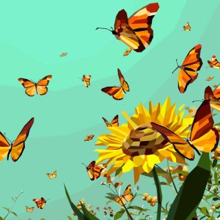 Nature - Colourful butterflies in the sunflower garden