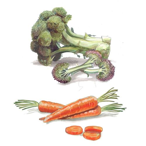 Illustration of Bocolli and Carrots