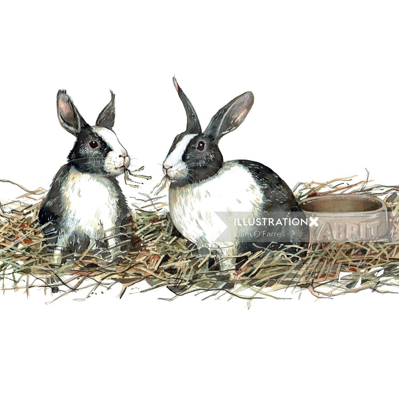 Rabbits, animals, pets,