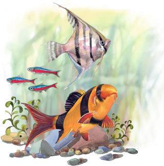 Fishes illustration