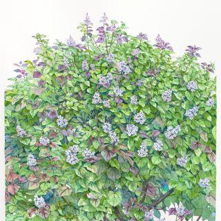 Liz Pepperell Painting