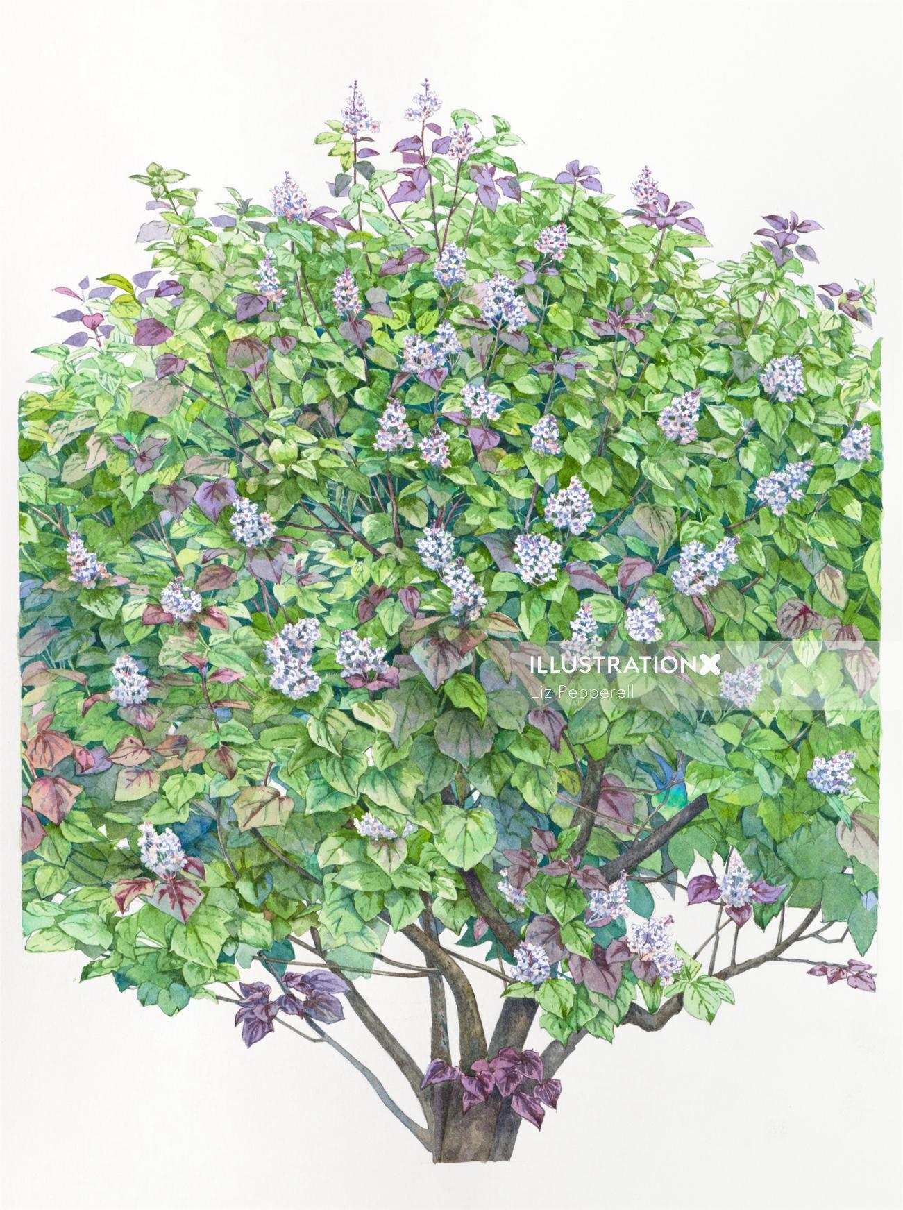 Catalpa tree Water color art