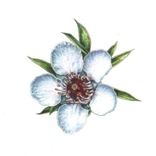 Passion flowers nature illustration