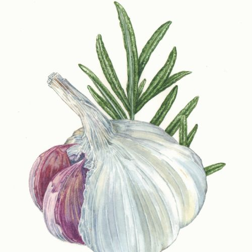 Food illustration of Garlic & Rosemary