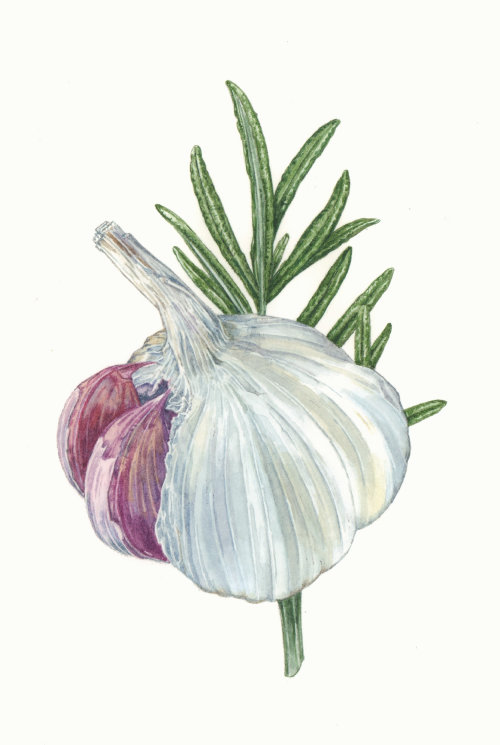 Food illustration of Garlic & Rosemary