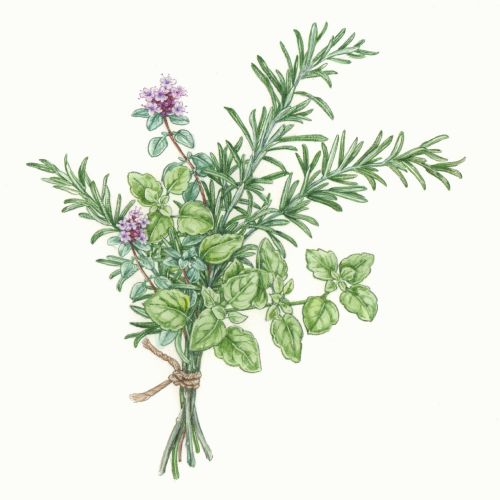 Liz Pepperell International botanical illustrator. UK