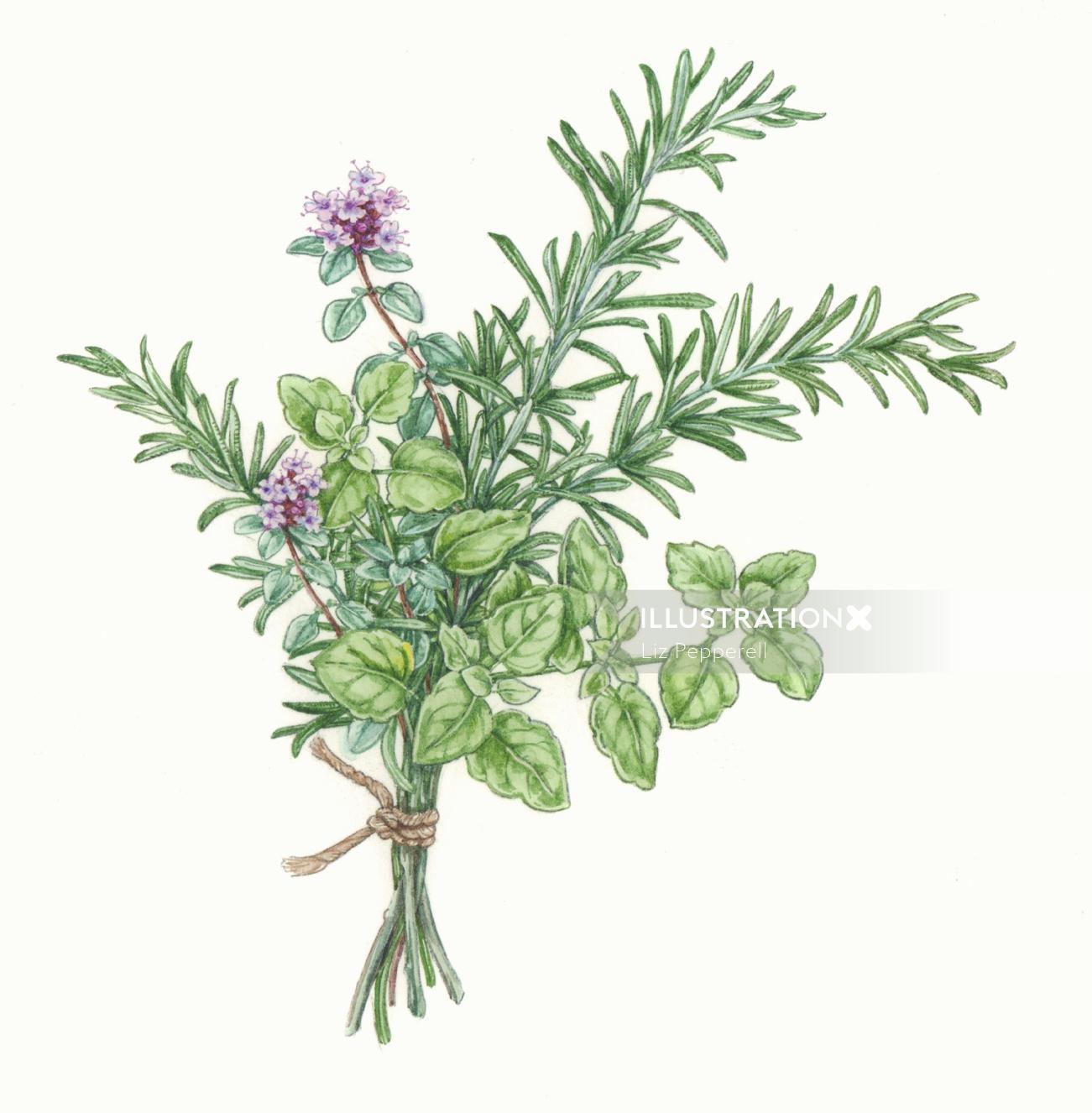 Food illustration of Herb Vegetable