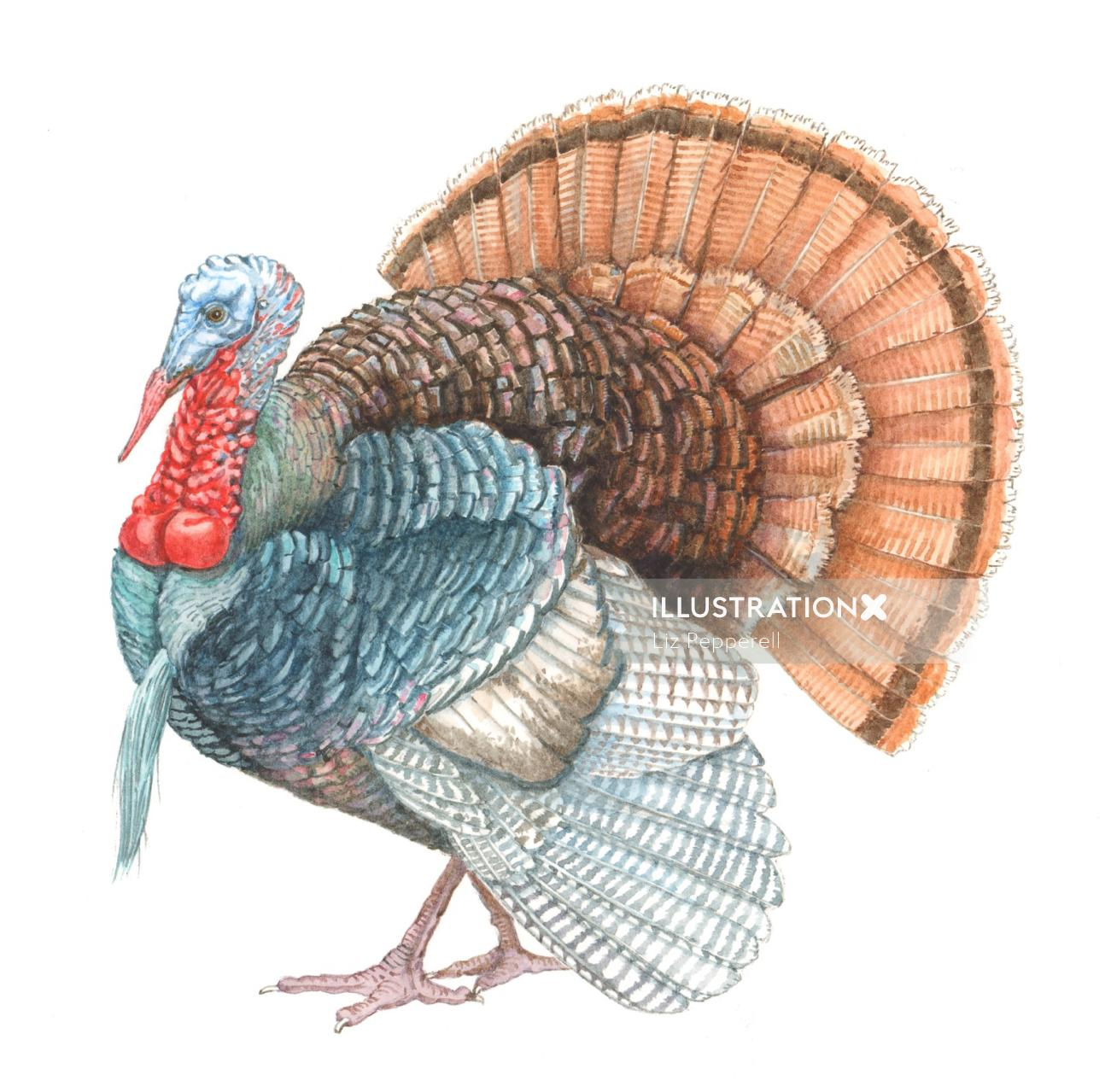 Turkey Gravy animal illustration